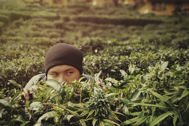 4 Tips for Stealth Weed Cultivation